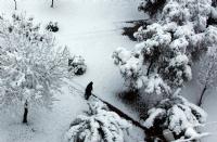 Karda İniş
