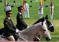 Tören Atları