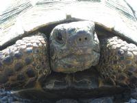 Kaplumbağa :)