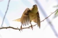 Uçar Kuş Çalışmaları