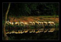 Ayna Düştü Göllere