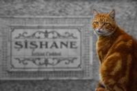 Bekçi Kedi