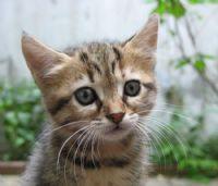 Kedi:)
