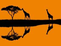 Afrika'ya