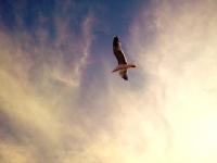 Martı Uçar Havalardan