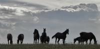 Thunder Horses