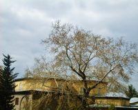 Çınar Ve Camii