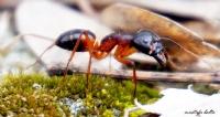 """Miniciks Hayatlar """" Karınca """""""