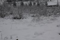 Bir Kış Manzarası