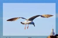 Uçmak Özgürlüktür