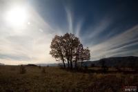 Ağaç Ve Bulutlar