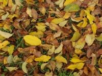 'yaprakdaki Sonbahar''