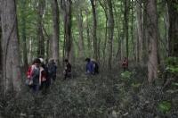 Longoz Ormanı