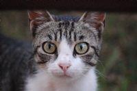 Kedinin Merakı