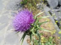 Güneşin Huzurlu  Çiçeği
