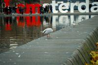 Kuşlar Ve Amsterdam