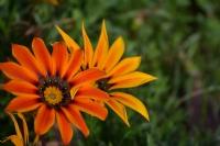 Çiçeklerde Elele Tutuşur