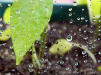 Yağmur Sonrası