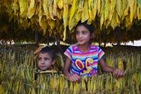 Sarı Altının. Çikolata Çocukları.. - Fotoğraf: Ahmet Mengüç