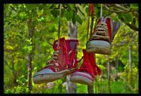 Ayakkabı Ağacı...