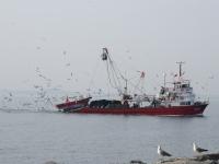 Tekne Ve Martıların Geçit Töreni