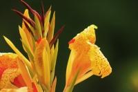 Solmasın Çiçekler