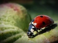 Uğur Böceği 2
