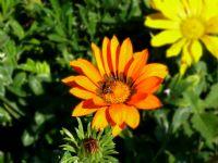 Çiçek-böcek Muhabbeti