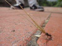 Çalışkan Karınca