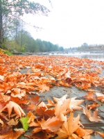 Sonbahar Hüznü...Hazanyeli