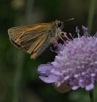 Çiçek_böcek