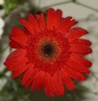 İsmini Bilmediğim Çiçek :))