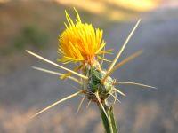 Diken Ve Çiçeği