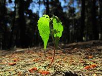 Ağaç Olacak
