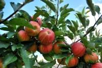 Elmalar, Garkın, Denizli