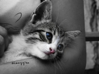 Bir Kedim Bile Yok Anlıyor Musun Hadi Gülümse :)