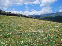 Dağlarına Bahar Gelmiş Memlemektimin