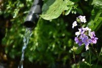 Yayla Çiçeği