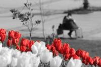 Çifte Bahar...