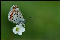 Kelebekler Zariftir - Fotoğraf: Fikri Arslankocaeli