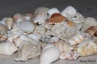 Deniz Taşları