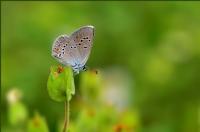 Güzel Mavi