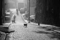Sokağın Sakinleri