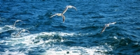 ''uçun Kuşlar Uçun'
