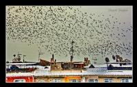 Kuşlar..