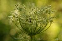Karınca Ve Çiçek...