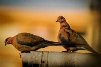 İnsanların Gözünden Kuşlar...