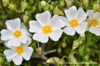 İlkbaharın Tonları...