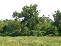 Sessizlik Ve Doğa