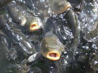Üç Balık
